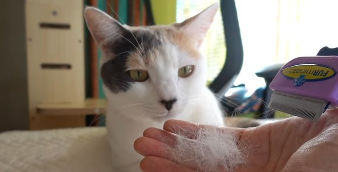 三毛猫ちゃんの毛玉ボール、7ヶ月目の様子は?