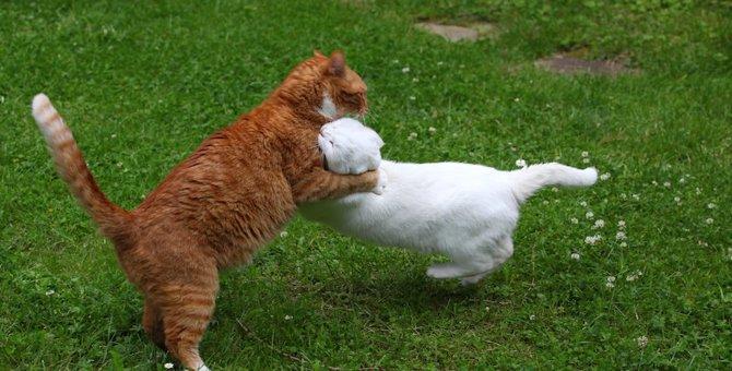 猫同士の取っ組み合い!本気か遊びか見分けるには?
