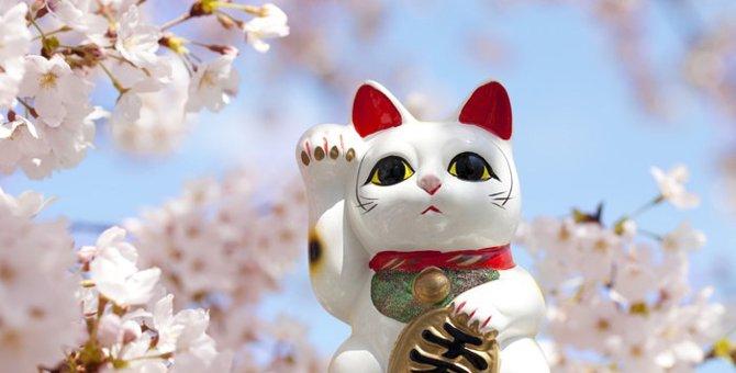 幸運を呼び込む「福猫」いろんなエピソードをご紹介!