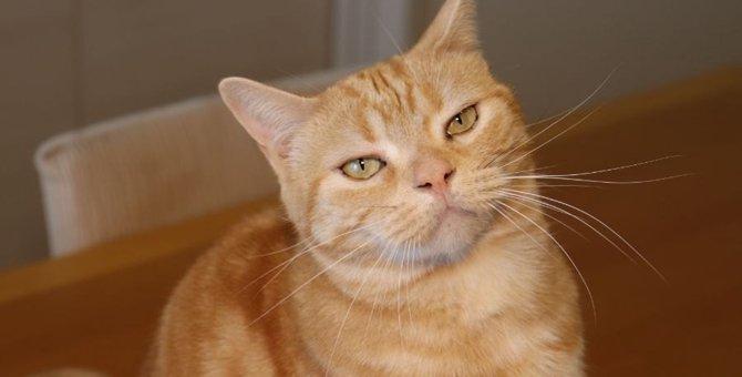 猫の『気分を害してしまう』飼い主のNG行動6つ