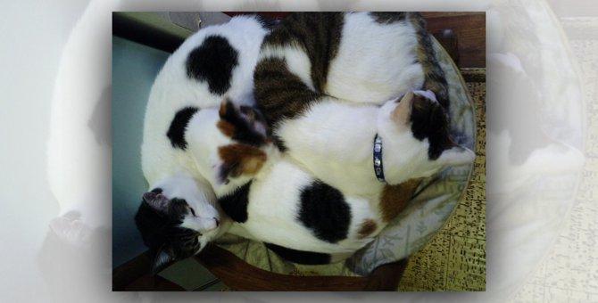 生まれてすぐ飼育放棄された愛猫たちとの20年で伝えたかった想い
