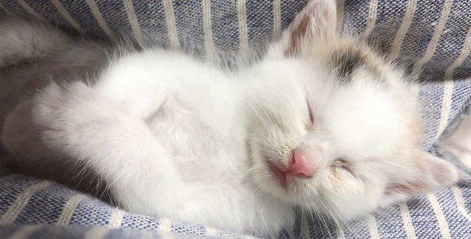 大雨の中ダンボールに捨てられていた子猫「フワ」と私の物語