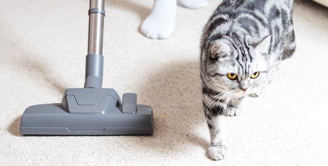 猫が思わず逃げ出したくなる『不快音』4つ