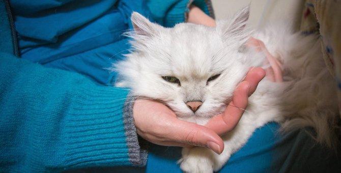 猫がしかめっ面をする8つの理由