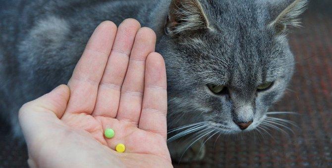 猫の寄生虫の薬 種類や飲ませ方
