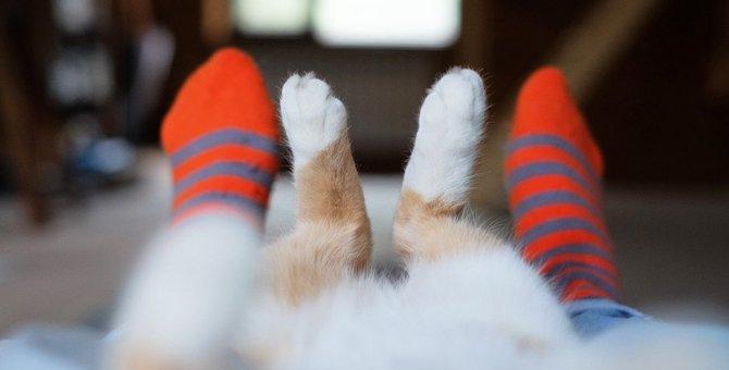 猫が飼い主の『足の間』に隠れる理由4つ