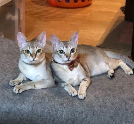 「猫の集会」をのぞき見したい!開催場所の傾向や探し方