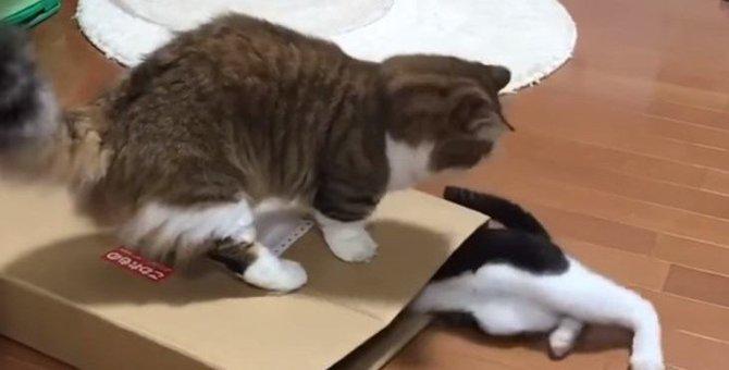 『踏んでる!』お茶目なパパ猫ちゃんのちょっとしたイタズラが笑える