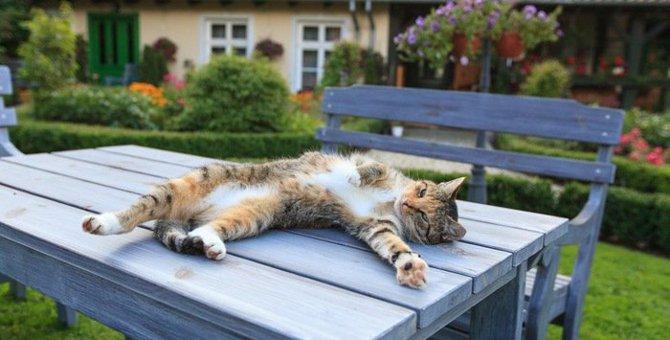 野良猫に庭を荒らされる!巷で噂の対策方法「メリット・デメリット」