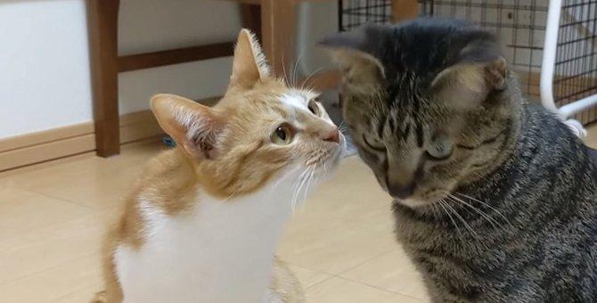 弟猫の秘密を知りたい姉猫さん