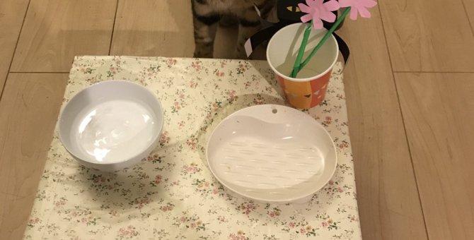 愛猫の食器台を可愛くアレンジ♡ダンボールとシールシートで手作り!