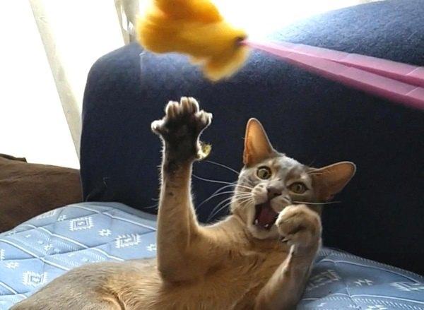 猫が急に遊びに飽きてしまう理由5つ