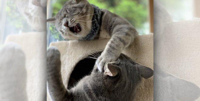 LAYLAの12猫占い【7/6〜7/12】のあなたと猫ちゃんの運勢