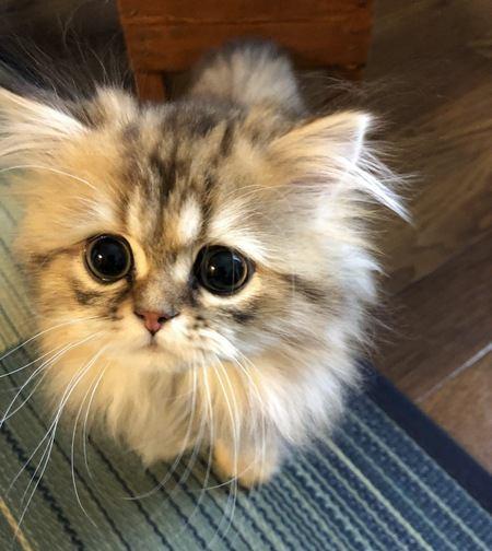 臆病な猫を社交的にする方法5つ