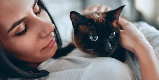猫に嫌われないための接し方5つ