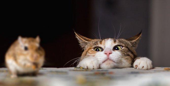 猫は狩りが好き!ペットになっても変わらない本能