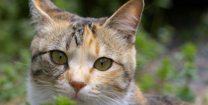 幸せの象徴!幸せを招く「幸福猫」3種類