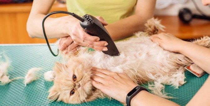 暑い夏を乗り越えよう!猫のサマーカット