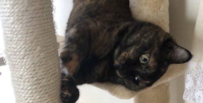 猫が急に激しく爪とぎをする心理5つ!さっきまで落ち着いていたのに…なぜ?