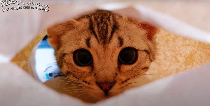 初めての紙袋にはしゃぐやんちゃな子猫が可愛い♡