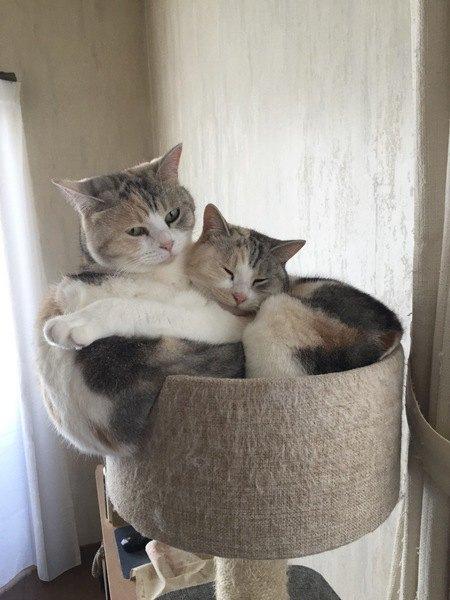 猫が高いところから飼い主を見下ろす心理5つ