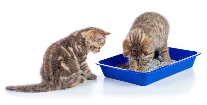 猫砂はどのくらいの深さまで敷くのがいい? 快適なトイレにする方法