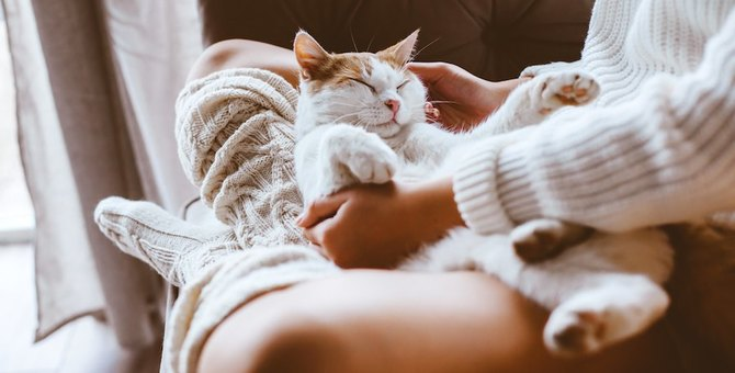 猫に長生きしてもらうために飼い主がするべき8つのケア