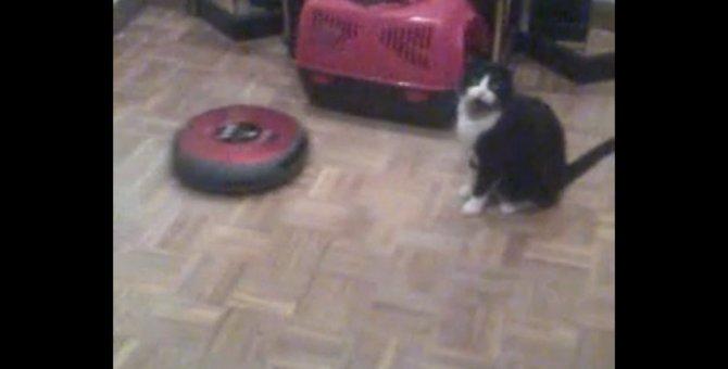 「にゃ…にゃぜそこに!」猫がルンバに負けた瞬間