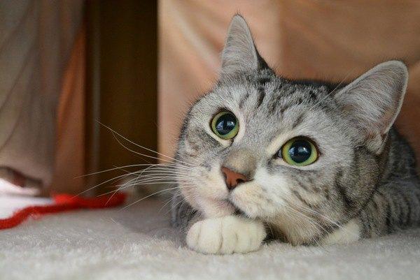 猫界ではどんな猫がモテるの?