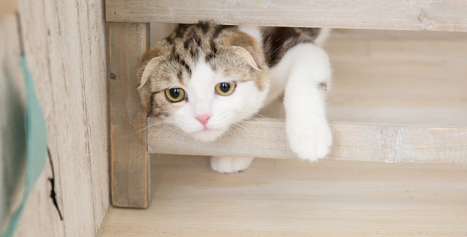 猫が家の中をパトロールする4つの理由
