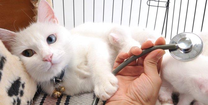猫専門の動物病院の特徴とは?