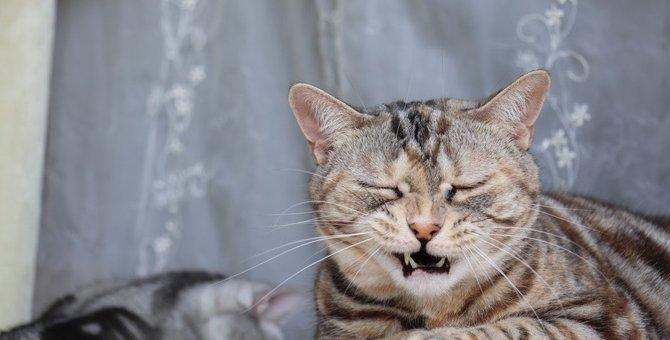 猫がくしゃみを何回もするとき考えられる原因5つ