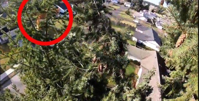 地上18メートルの細い木の上に立ち往生…今にも落ちそうな猫をレスキュー