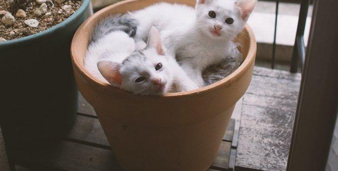 猫が鉢植えの土を掘ってしまうのはなぜ?理由と対策4つ
