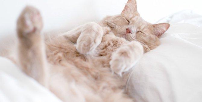 猫との暮らしで必要な物、幸せを感じてもらうためにできる事