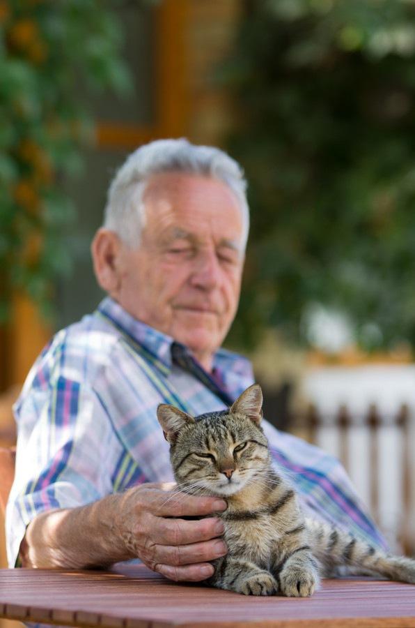 猫の扁平上皮癌の症状と原因、その治療や費用