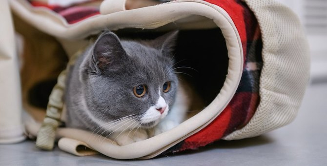 ルートートの猫バッグがかわいい!おすすめ商品5つ