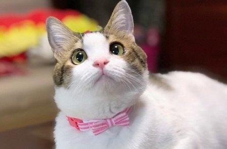 猫にもパーソナルカラーがある!?愛猫に似合う色の選び方