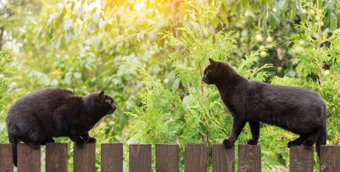 猫が自分よりも強いと思っている相手にする仕草3つ