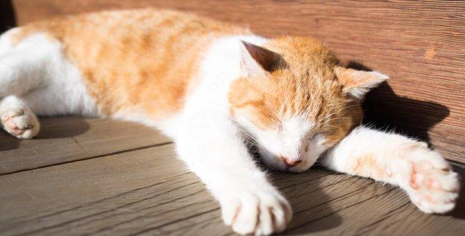 猫が日向ぼっこをする2つの理由と注意点