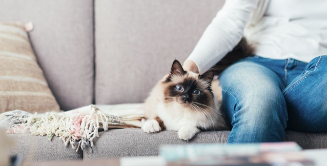 猫を一人暮らしでも飼いたい!注意点とおすすめの方法