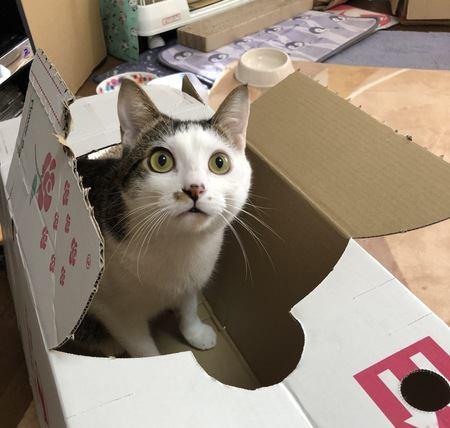 猫が我慢できずに思わずやってしまうこと5つ