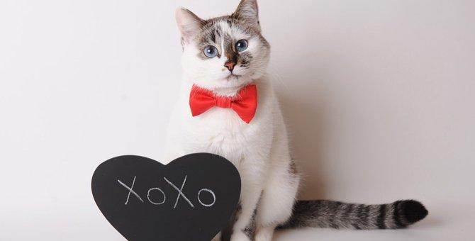 猫に名前をつける方法・人気ランキング