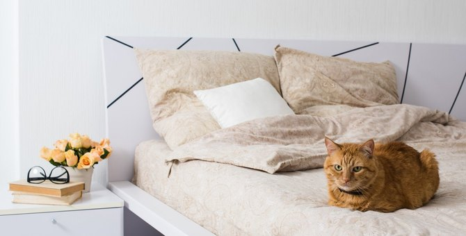 猫がホテルに預けられたときの気持ち5つとケア方法