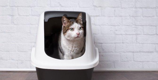 猫の便秘は危険。気を付けるべき兆候と対処法5つ