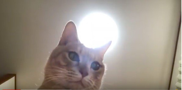 可愛く撮れてるかにゃ?猫ちゃん自撮りに挑戦!