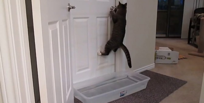 「そんな手は通用しにゃい!」ドアの防衛を突破する猫