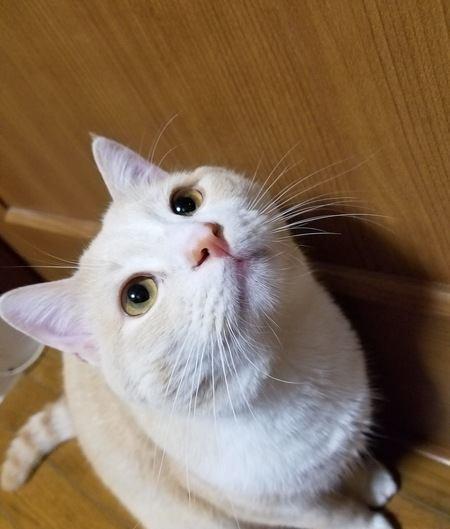 猫が飼い主に喋りかけてくる時の心理4選