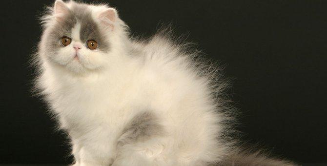 猫は静電気が大キライ!飼い主がすべき防止対策