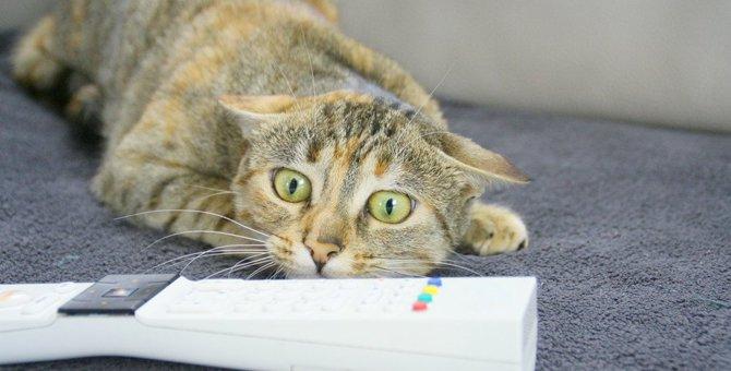 猫の脳炎の原因から症状、検査や治療法まで